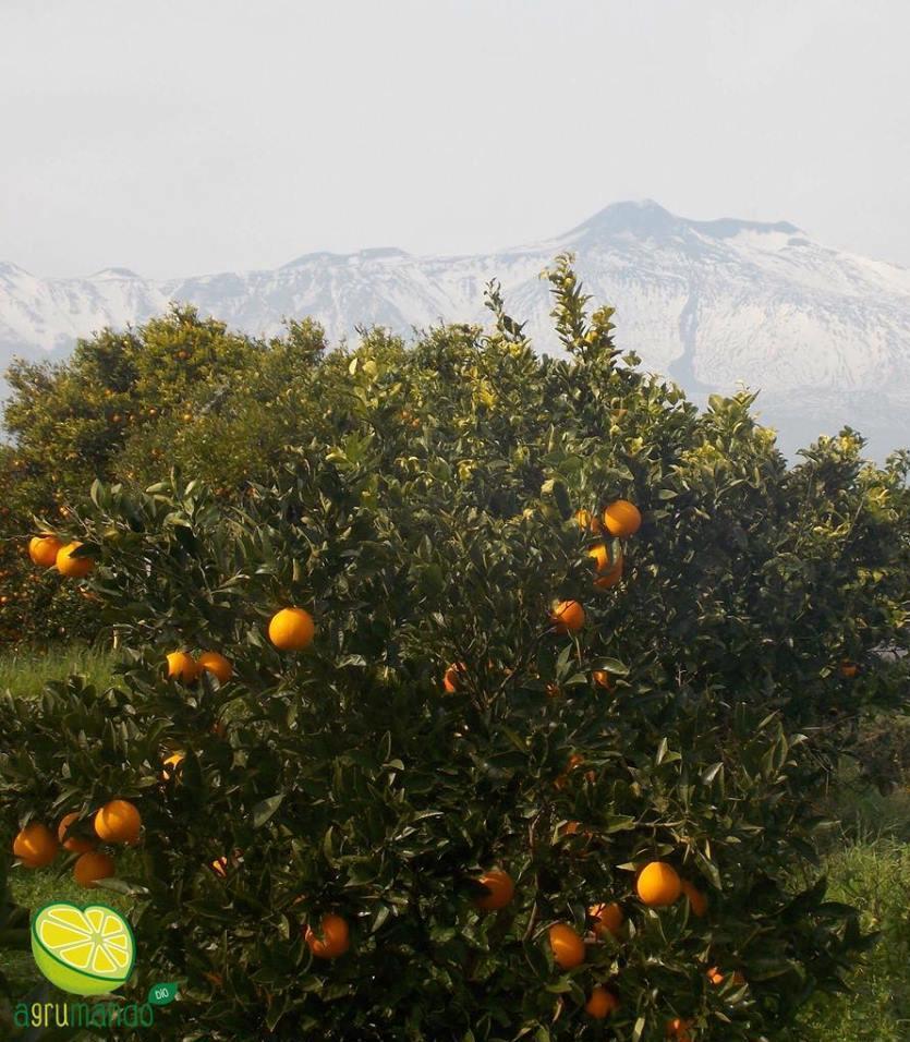 Arance Etna